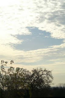 Garret Tree Dec. 2005