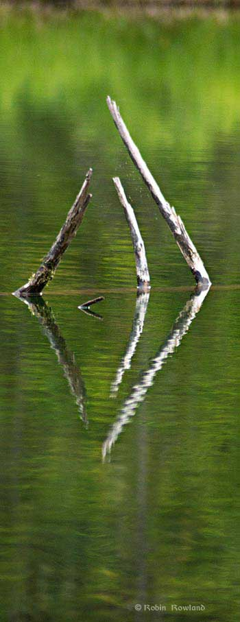 Sticks reflected in water