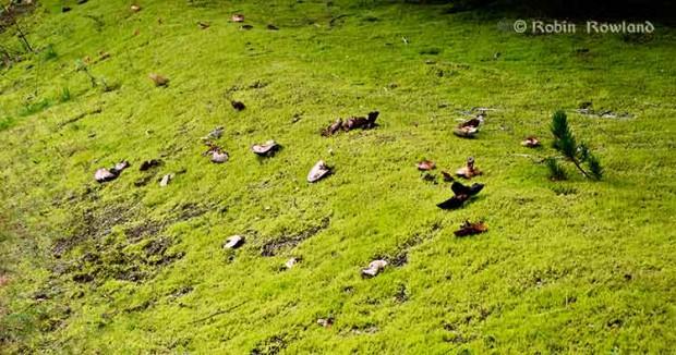 The mushroom field