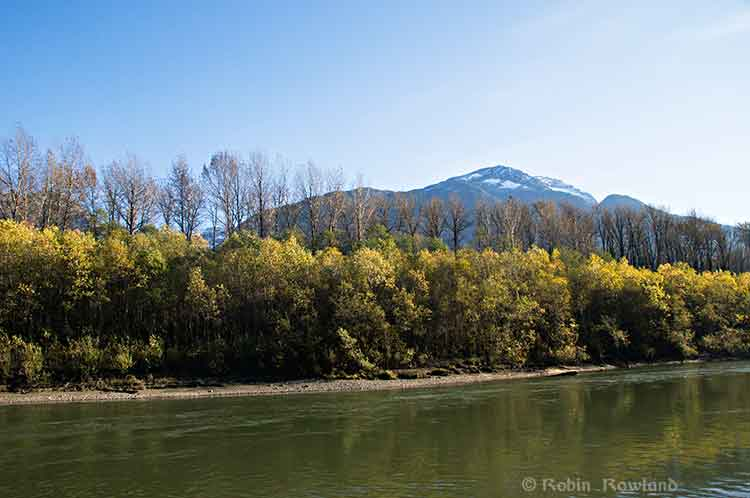 Cottonwood and alders along the Skeena
