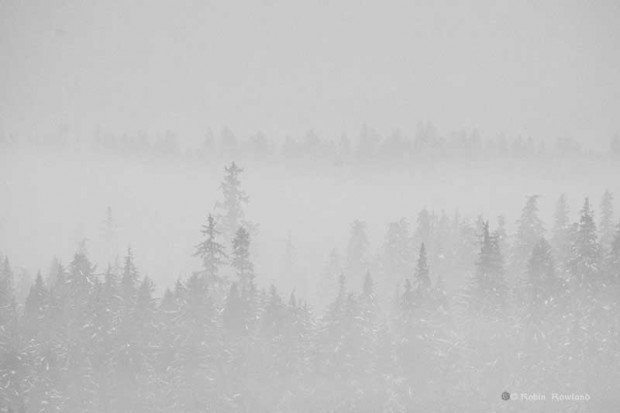 Fog in Kitimat Valley