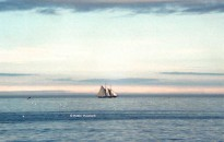 The Bluenose II sailing off Sydney, NS,  July 11, 1984 (Robin Rowland)