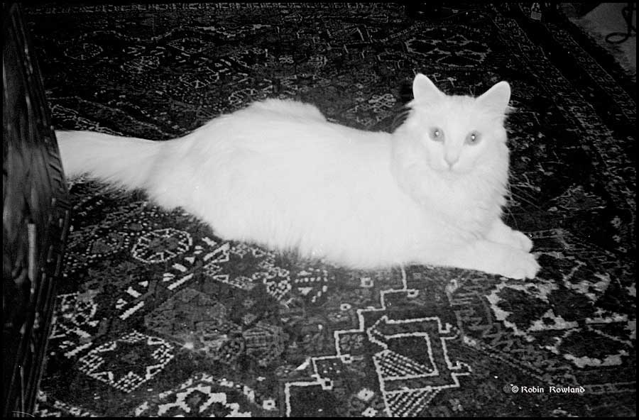 The first shot I have of Euri, taken on film, sometime in 1998 when he was about a year old. (Robin Rowland)