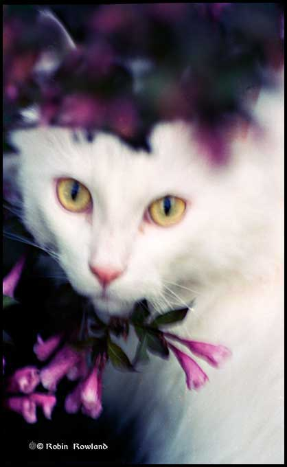 A portrait of Euri among garden flowers, taken on Ektachrome film, sometime in 2002. (Robin Rowland)