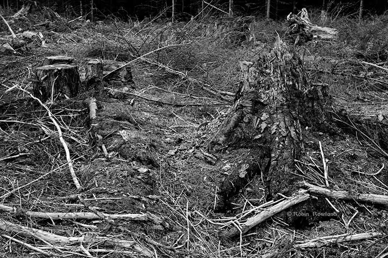 slashstump1bw