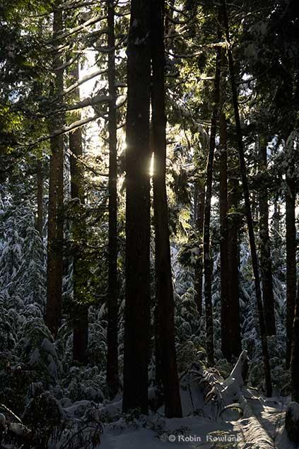 lightinforest1