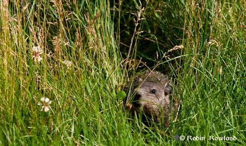 128-groundhog3.jpg