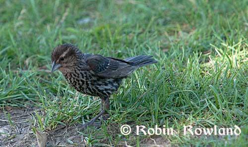 133-bird2.jpg