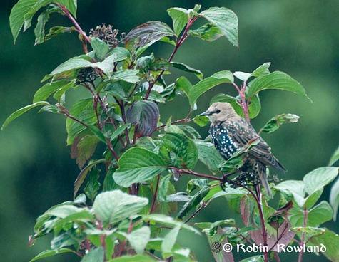 178-birdinbush-thumb-475x368-177.jpg