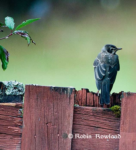 184-birdonpost-thumb-475x526-183.jpg