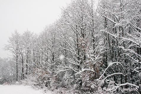 257-snowtrees1.jpg