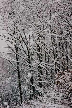 258-snowtrees3.jpg