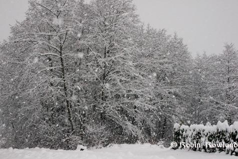 259-snowtrees2.jpg
