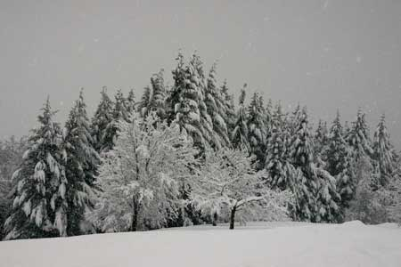 270-Rowland_kitmat_heavy_snoww.jpg