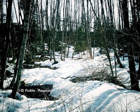 305-vignette_forest-16-48-30-096.jpg