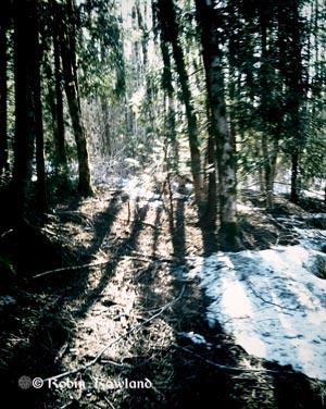 306-vignete_forest-16-53-04-276.jpg