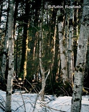 307-vignetteforest-16-39-20-348.jpg