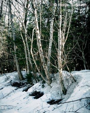 308-forestvignette-16-43-51-157.jpg