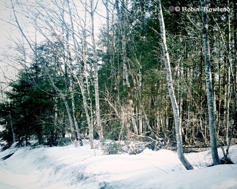 309-vignetteforest-16-35-35-796.jpg