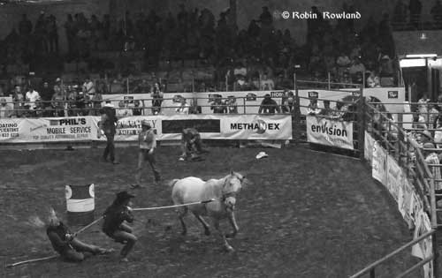 411-wildhorse2.jpg