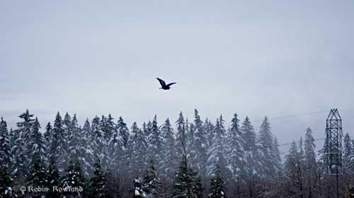 667-heron.jpg