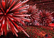 87-01_canadablooms10-thumb-220x156-86.jpg