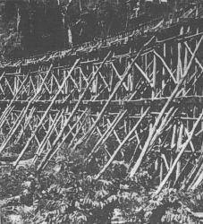 82-tierbridge-773534.jpg